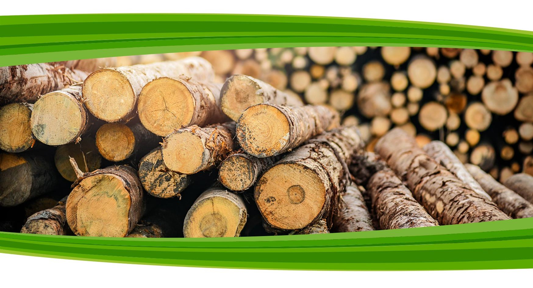 Brochure on illegal logging and timber trade flows in the Western Balkans and Turkey